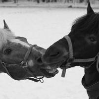 Galloping horses ....